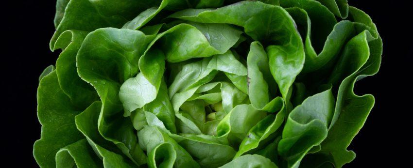 Photo of lettuce on black background